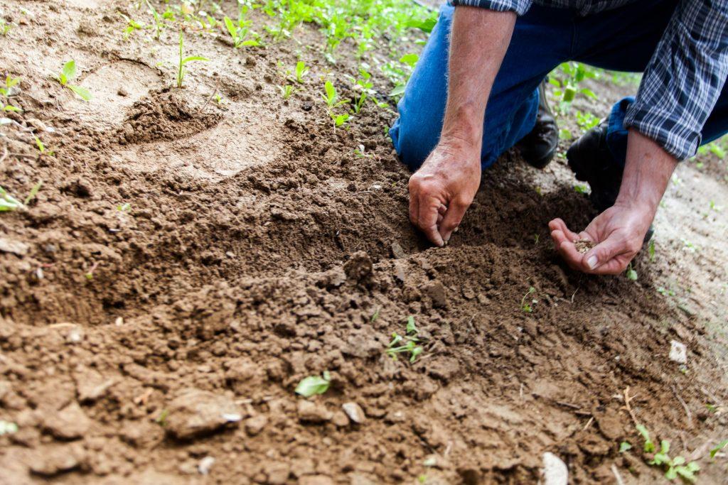 gardener planting seeds
