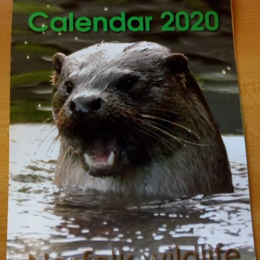 Featured image for 2020 Norfolk Wildlife calendar now on sale
