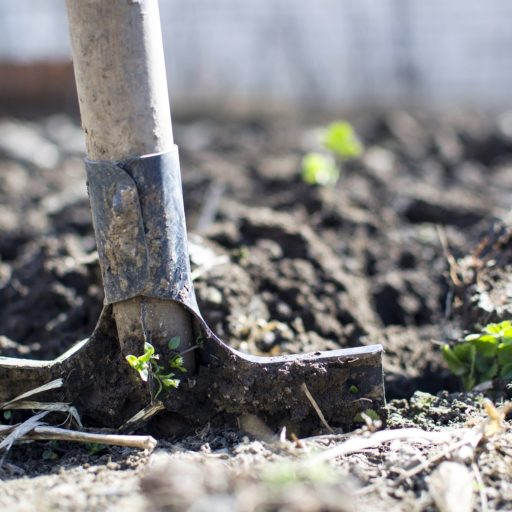 Featured image for Volunteer gardeners wanted to for new allotment project