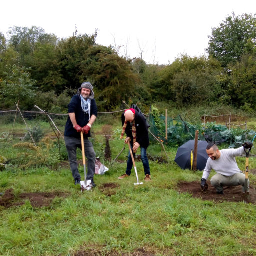 Featured image for Gardening for health and wellbeing